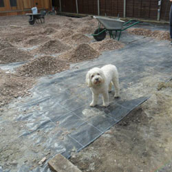 White Dog on Groundworks