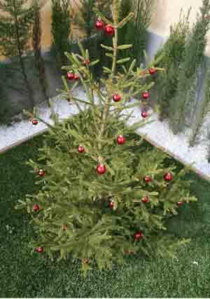 Artificial Grass Tree and Mat