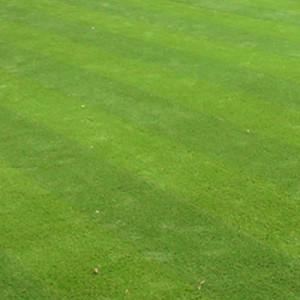 Square artificial grass
