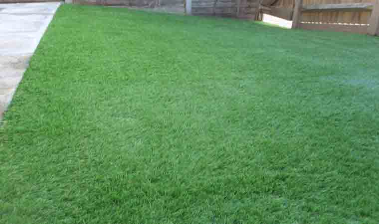 completed back garden lawn chatham