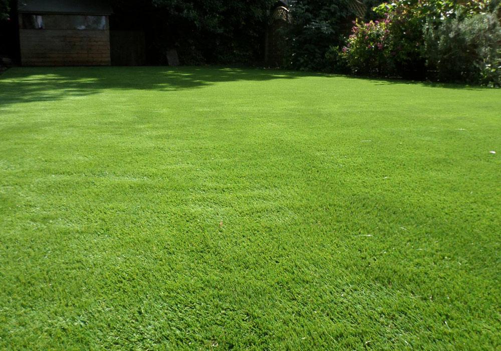 Back gardens perfect grass ltd for Garden grass