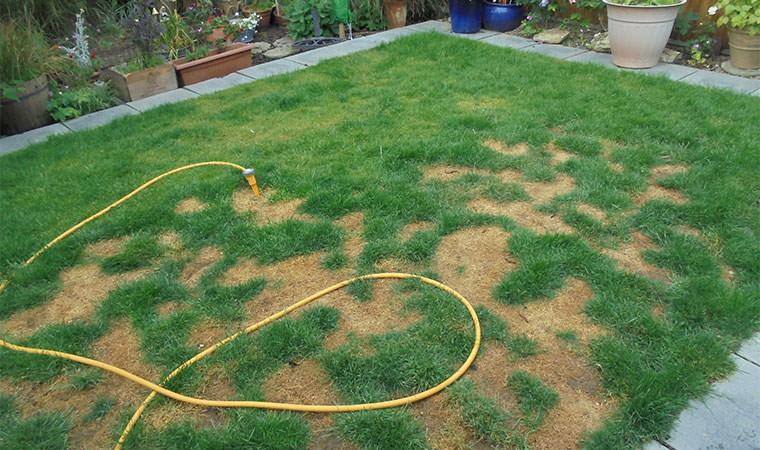 Graden Lawn in Belvedere Before
