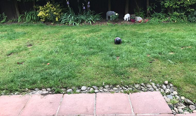 Current lawn looking worn
