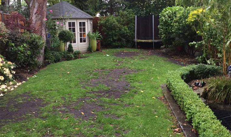 Worn out garden lawn