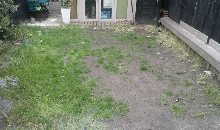 Worn out looking lawn