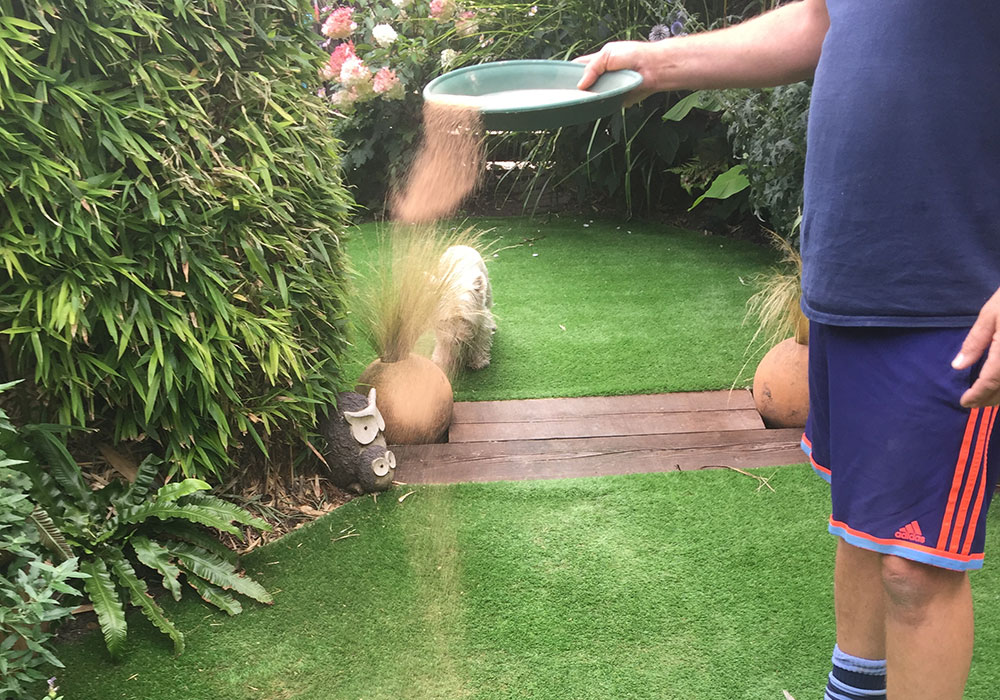 How to eliminate the smell of dog urine from artificial grass I