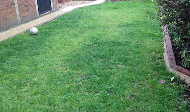 Lawn regularly dug up by the dog