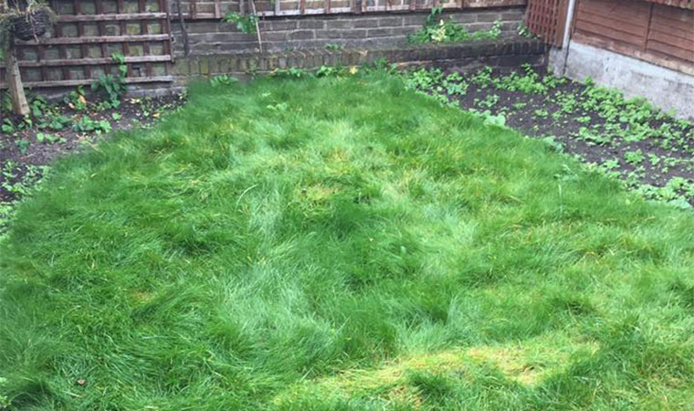Untidy garden lawn and borders