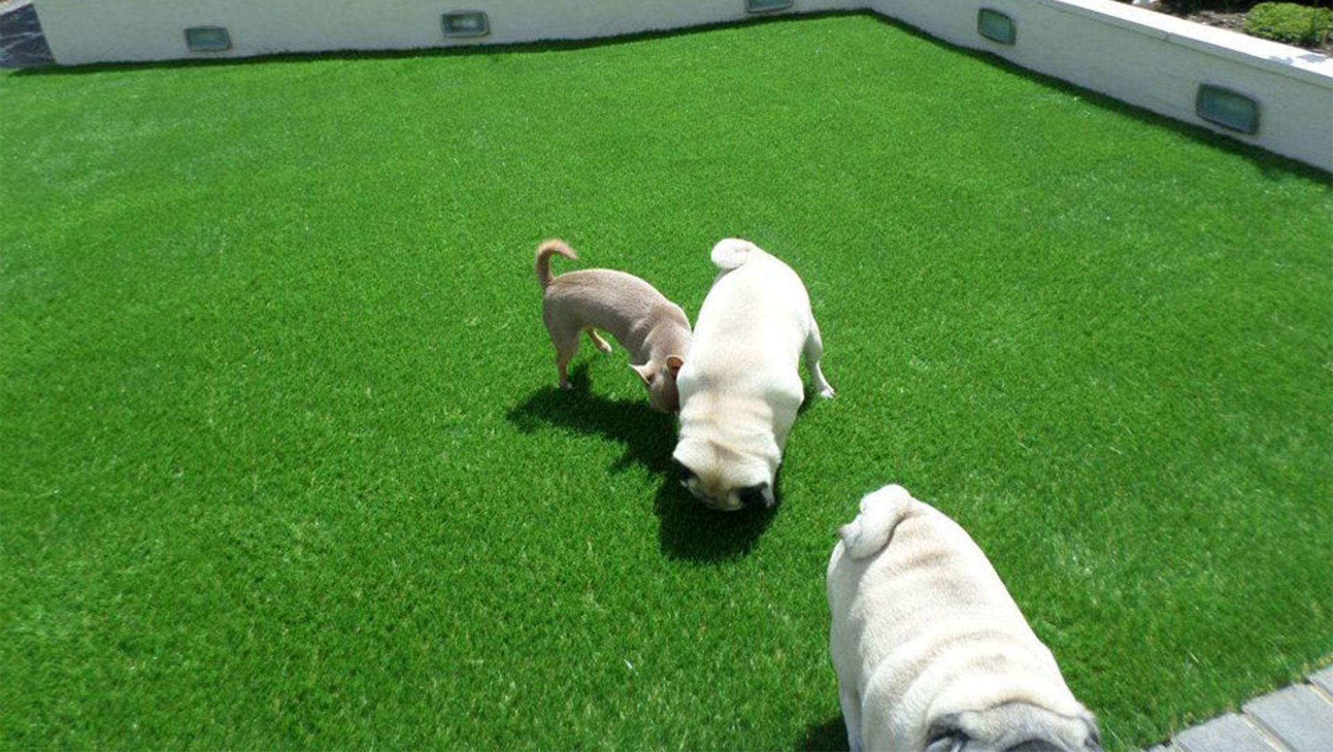 The Best Artificial Grass For Dogs Perfect Grass Ltd