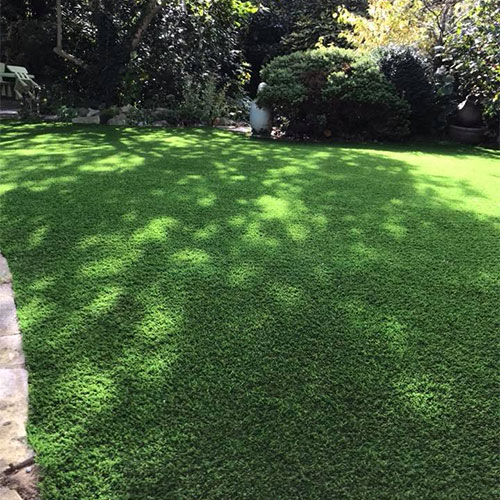 Greyhound friendly grass lawn
