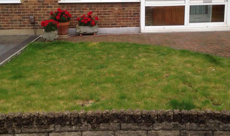 Troublesome front garden lawn