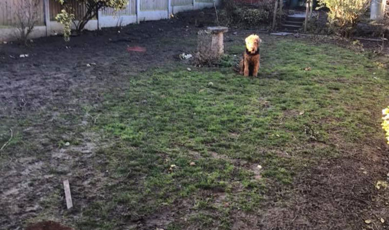 What to do with muddy dogs