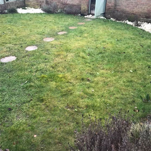 Good shape existing lawn