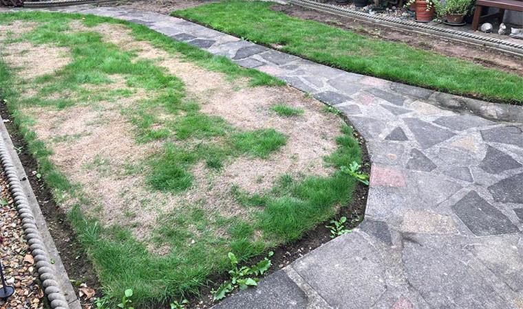 Sun damaged lawn