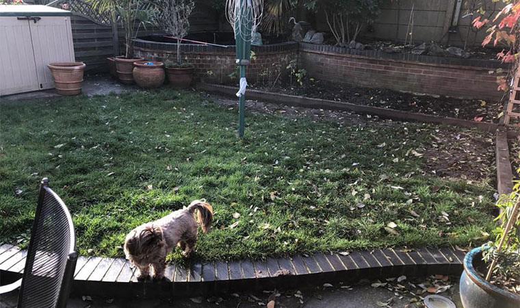 Messy lawn Bexley