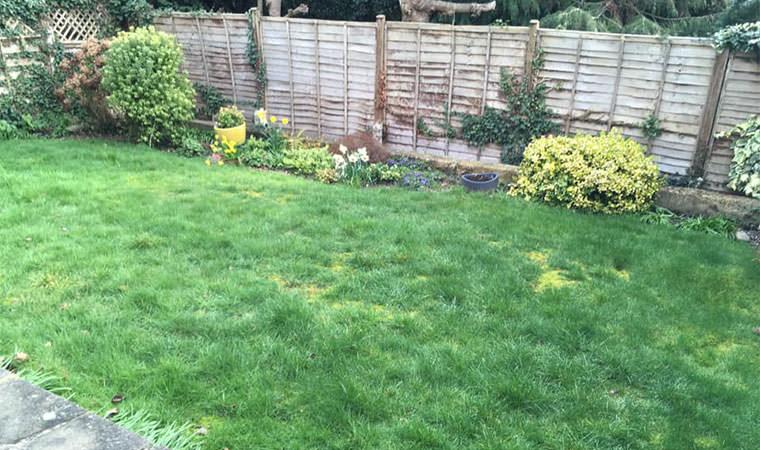 Back garden Beckenham