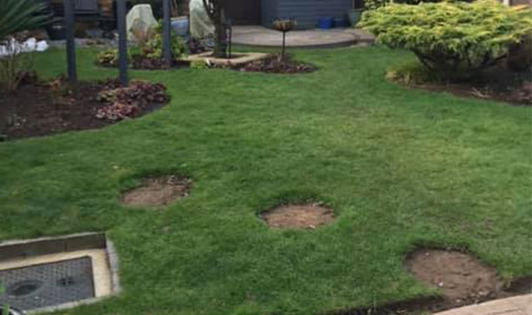 Ditton lawn to start