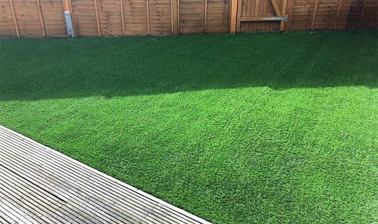 Lawn suitable German Shepherd Pup