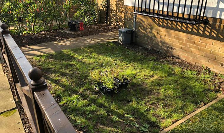 Original lawn Blackheath