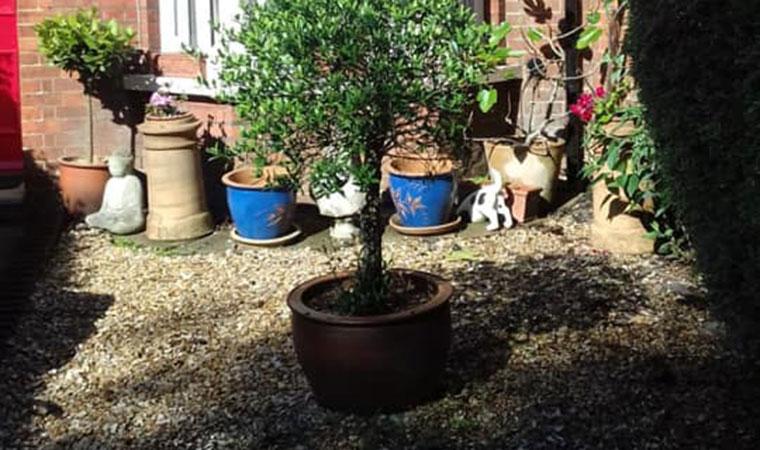 Small front garden lawn Chislehurst