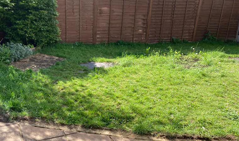 Back garden lawn Crayford