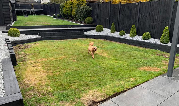 Unhappy dog Bexleyheath