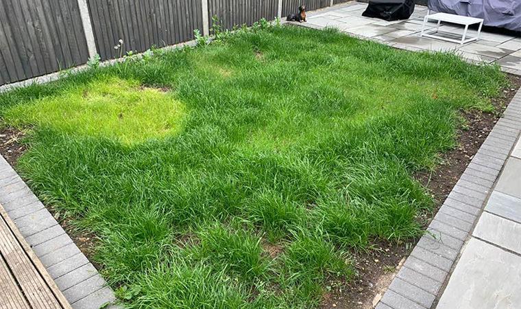 Grass lawn Bromley